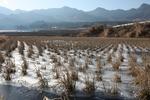 氷で覆われた田んぼD01.jpg