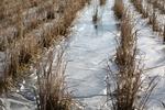 氷で覆われた田んぼD03.jpg
