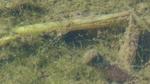 藻(田B)2.jpg